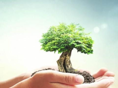 Pegada de Carbono e Pegada Ecológica